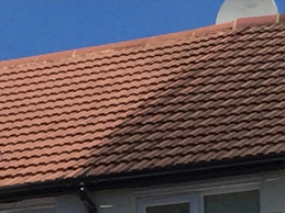 roof cleaning specialists